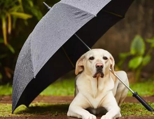 Walk Your Dog on A Rainy Day