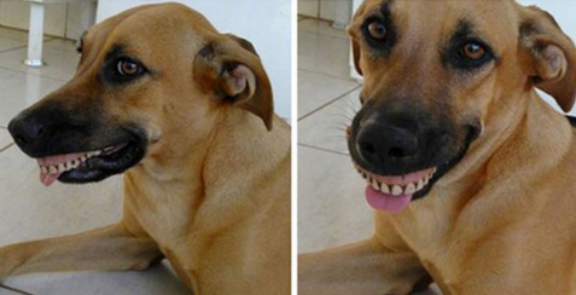 Tomkas dog brought a pair of dentures