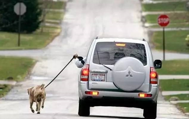 Taking Outside A Dog Always by Cars