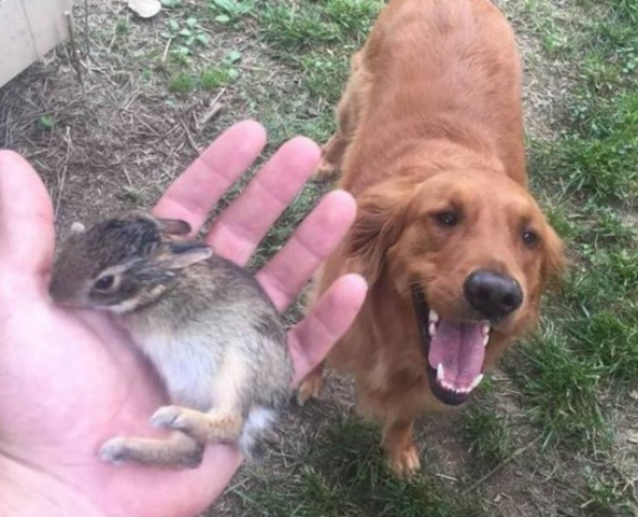 Tomkas dog brought back to a little rabbit