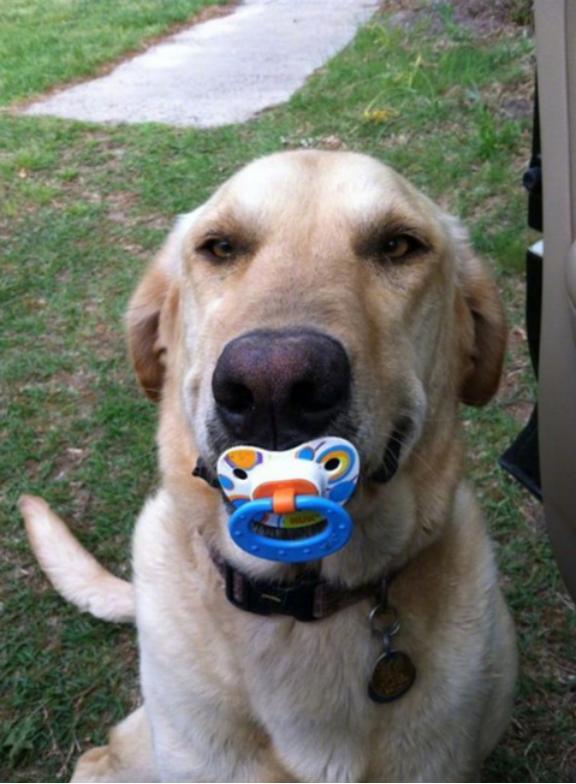 Tomkas dog brought toys