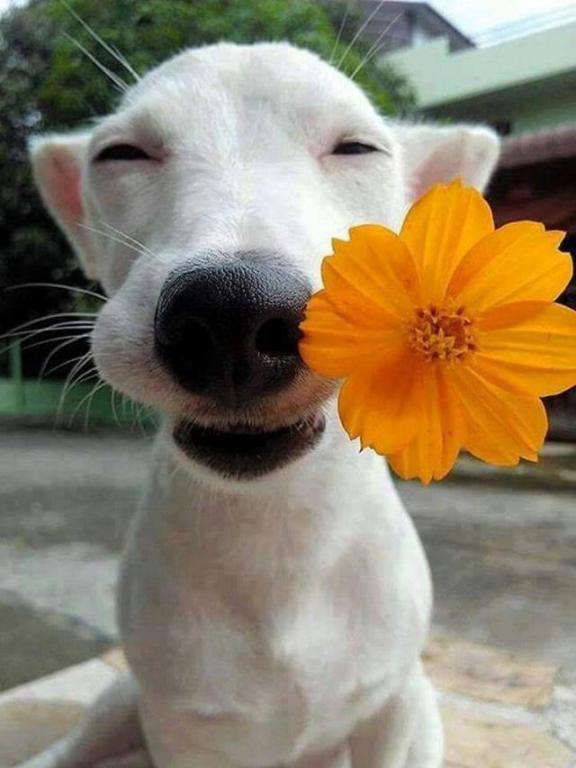 Tomkas dog brought flowers