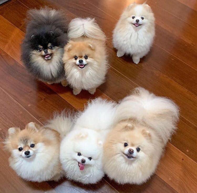 TOMKAS Puppy Dog