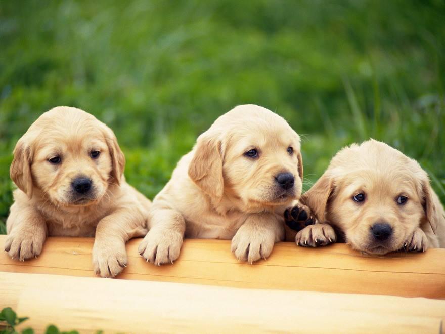 tomkas dogs