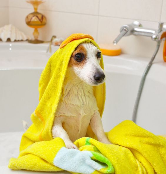 [Pet Cleaning Products] How to care for different pets The most practical daily cleaning knowledge of pets