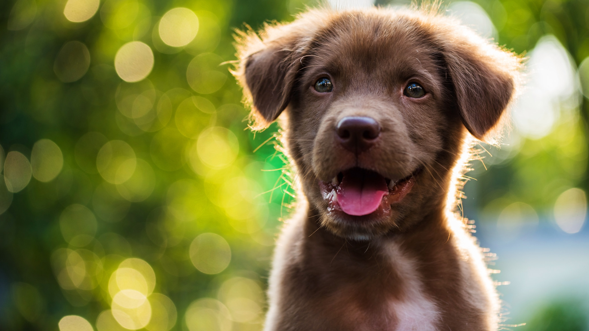 Mastering the simple dog training method, training dogs is not a problem